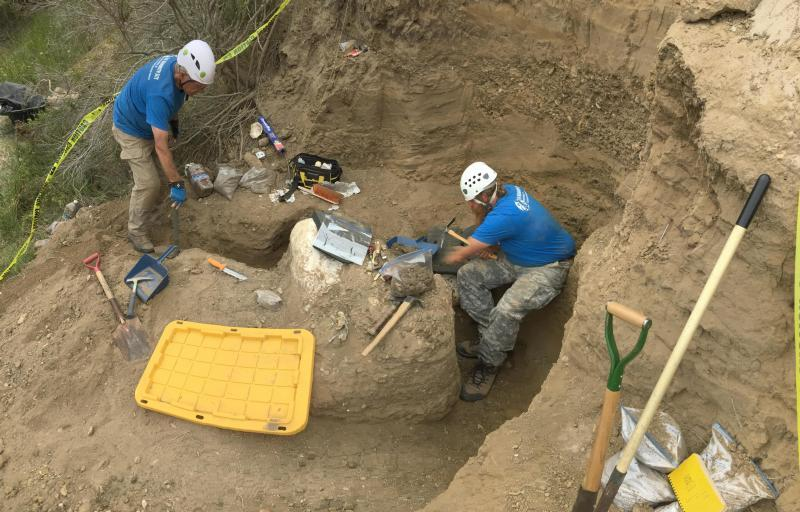 Mysterious Mammoth Skull Found in California Park