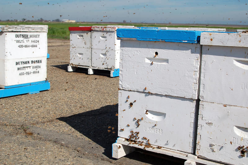 Bee hives are supposed to be branded with the owner's identity, although Butte County Sheriff Detective, Jay Freeman, says that often doesn't happen. In this case, the bee hives did have owner identifiers, which is what helped locate the stolen hives.