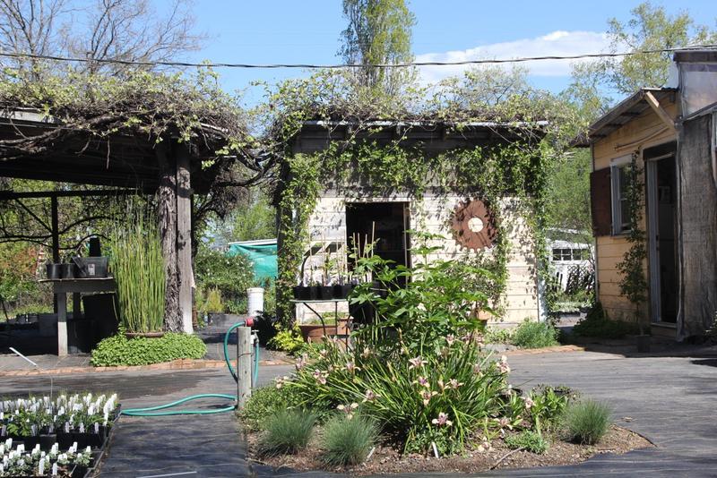 California Flora Nursery