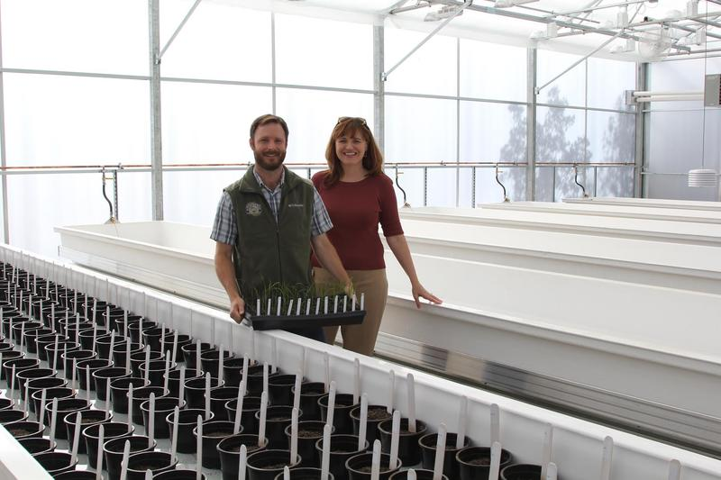 Jessica Lundberg and biologist J.P. Bergmann proudly display some of the first seedlings to be trialed in the new greenhouse facility at Lundberg Family Farms.