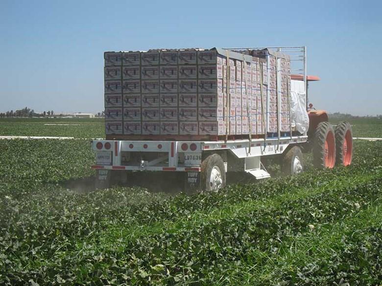 Truck hauling cantaloupes picked near Los Banos, California.