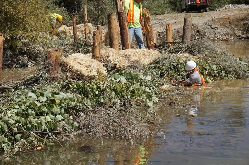 Workers, including Gabriel Anderson, (in water) a Fisheries Tech with the Hoopa Tribe, construct an artificial beaver dam. It's hoped that this nature-mimicking scheme will create a new shallow wetland that will feed and protect young salmon.