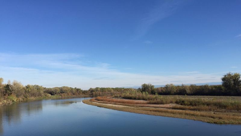 View over a healthy bend in a local river demonstrating natural flood plains and early successional plant communities of willows and grasses establishing themselves along the water's path.