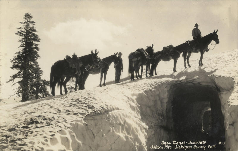 Pack train in the snow, Salmon Mountains, 1920