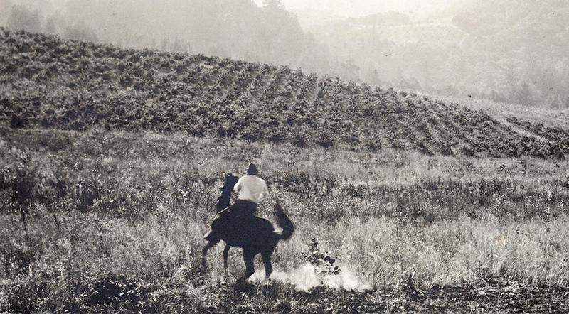 Jack London on horseback at Beauty Ranch