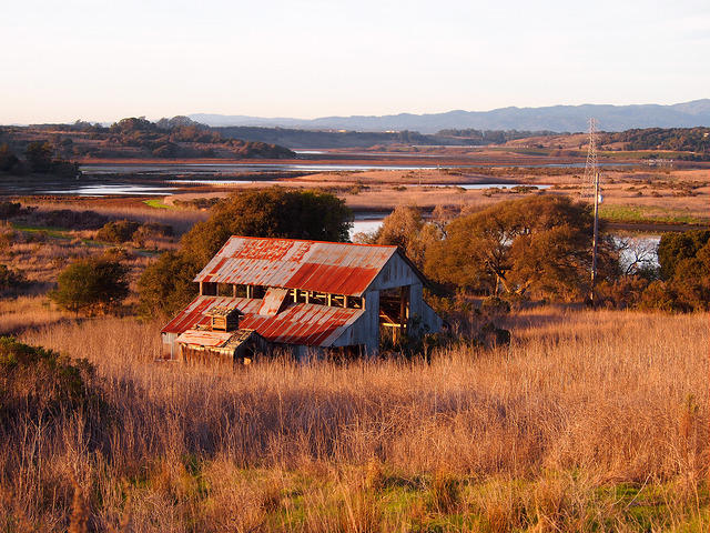 Part of Elkhorn Slough was once a dairy.