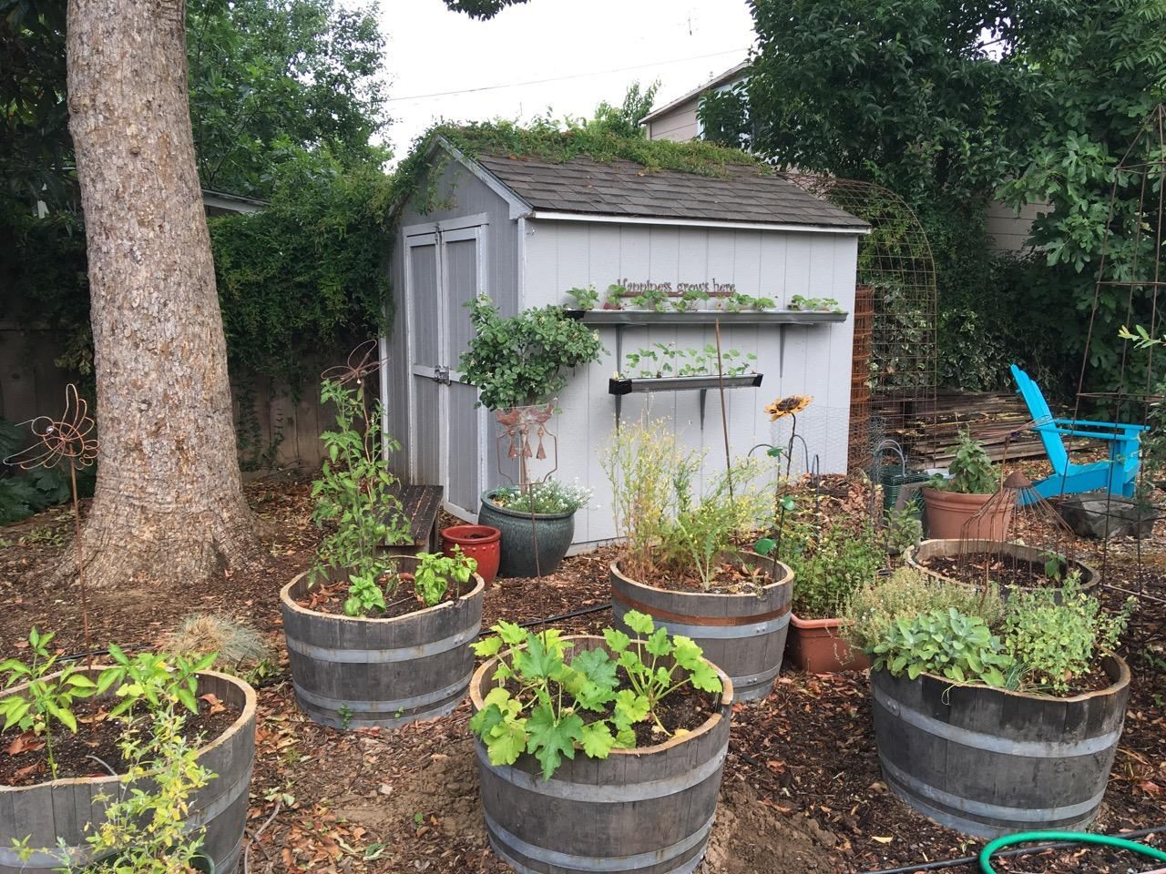 cultivating place dispatches from the home garden u2013 urban