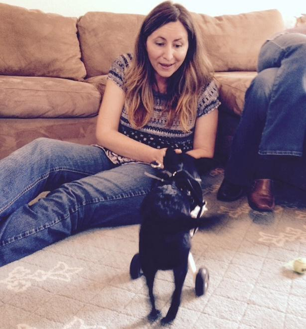 Yvette Bocz with Leo, her dog as he tries his new prosthetic device