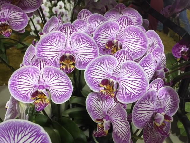 The Orchid Show features 13,000 square feet of vendors who have orchids for sale, so fans can take home plants with them