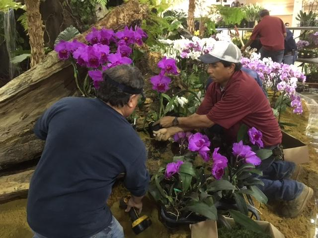 Workers help set up some of the 22,000 square feet of orchid displays for the 72nd annual Santa Barbara International Orchid Show