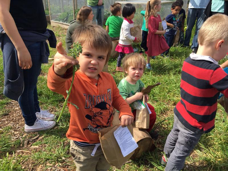 "Four-year-old Christopher Busselen holds a piece of broccoli he ""harvested"" by picking it and placing it in his bag to take home"