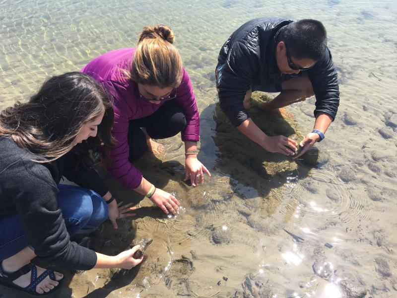 Students Emily Read, Erin Winslow and Desmond Ho carefully look at rocks in search of Olympia oysters