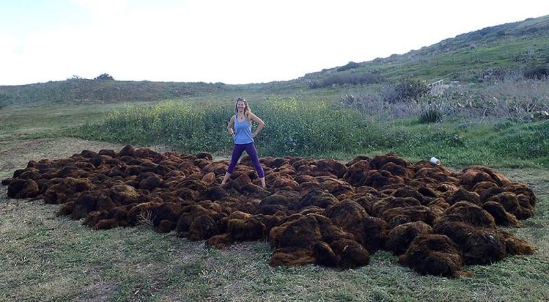 UC Santa Barbara researcher Lindsay Marks with non-native seaweed removed from ocean off the California coastline