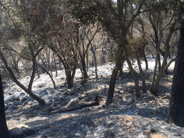 The Whittier Fire has left areas looking they are covered with snow, except its ash from burned vegetation