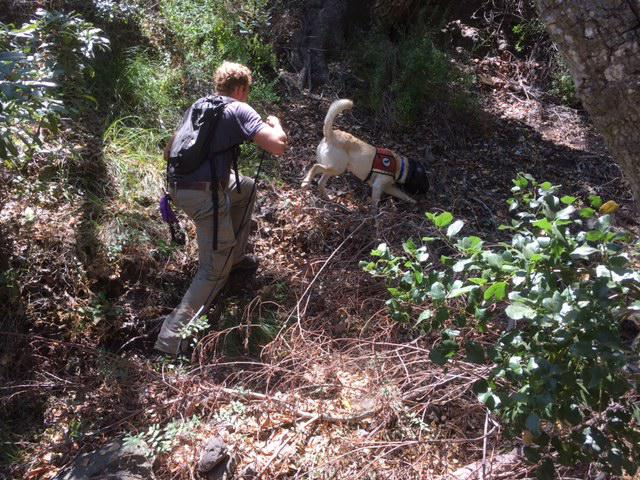 Handler Kai Zimmerman and Tobias, the search dog go out a few times a day looking for ants on Santa Cruz Island