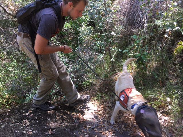 The Argentine ants covered about a thousand acres of Santa Cruz Island, but the search dog has so fire confirmed that efforts to eradicate them appear to be successful
