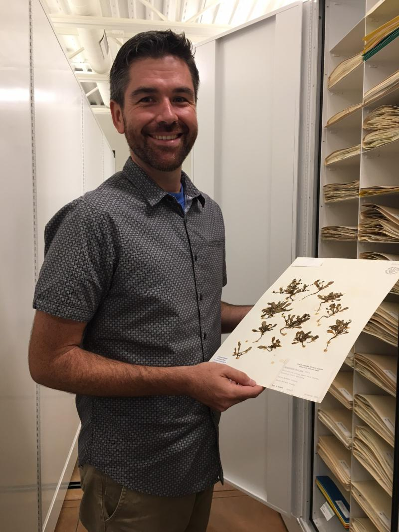 In the Herbarium, Santa Barbara Botanic Garden Botanist Matt Guilliams shows specimens of a flowering plant he discovered