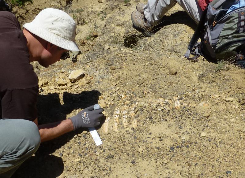 Researchers work on fossils of Sea Cow on Santa Cruz Island