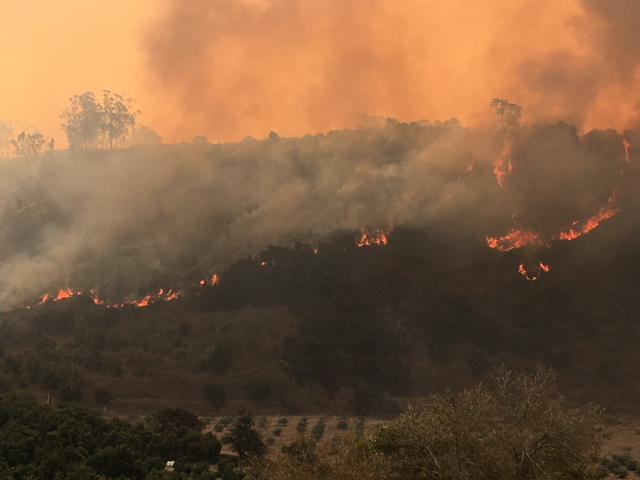 The Thomas Fire burned from Ventura County into Santa Barbara County today, making it to agricultural fields about two miles east of Carpinteria