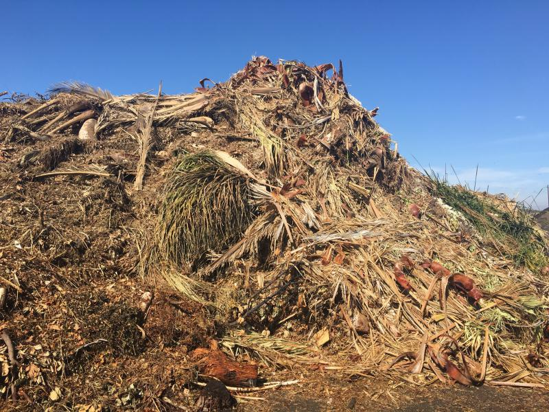 Green waste that's piled at Agromin's processing center in Oxnard