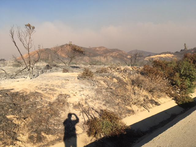 A hillside near Fillmore charred by the Thomas Fire