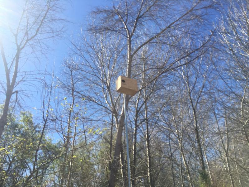 The owl box stands 20 feet from the ground once it is installed