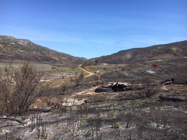 Part of the area on Santa Cruz Island charred by a brush fire which started March 27th