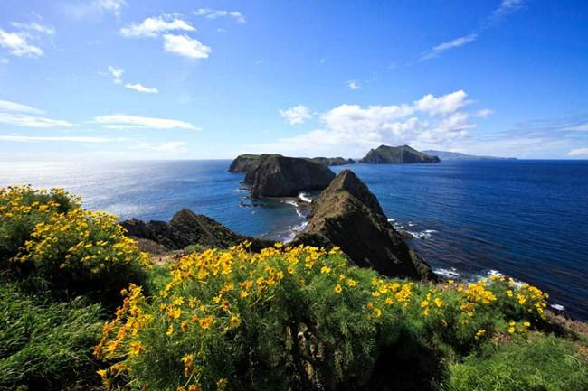 Anacapa Island is about five miles long, but only a half to a quarter of a mile wide