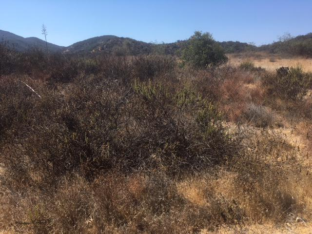 Some South Coast areas of brush buildup that hasn't burned for decades, posing a big threat as we move into peak fire season