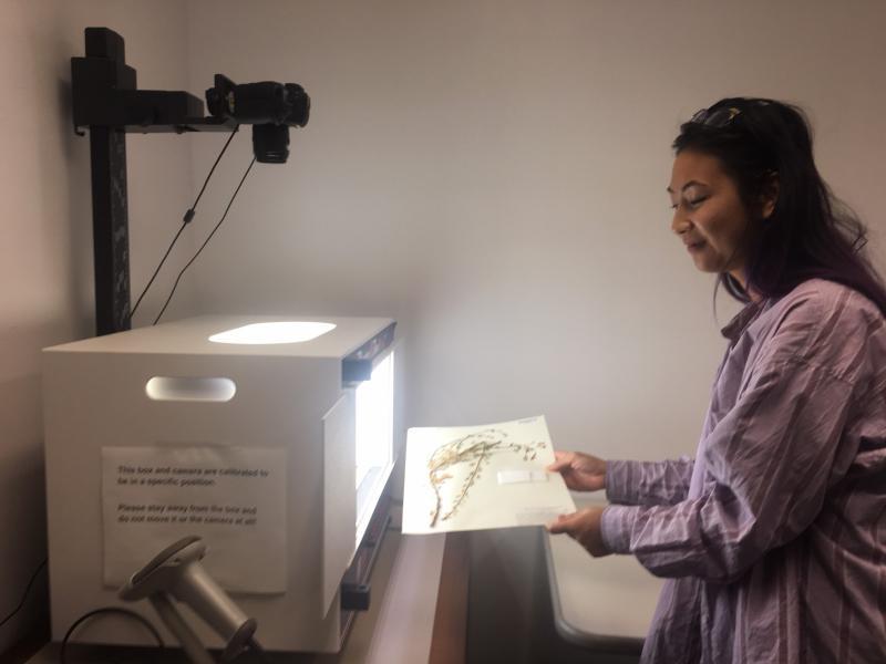 UCSB Biology student Andrea Liu digitizes herbarium specimens