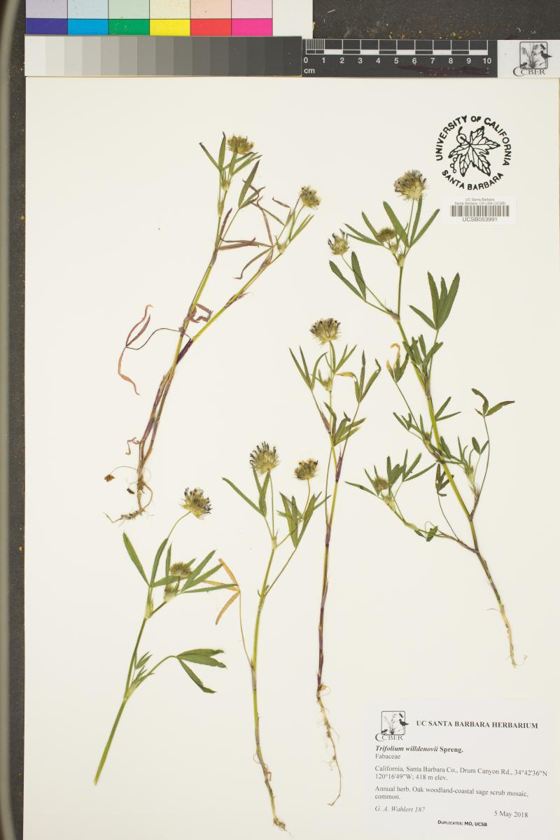 Specimen from UCSB's Herbarium that will be added to the online database