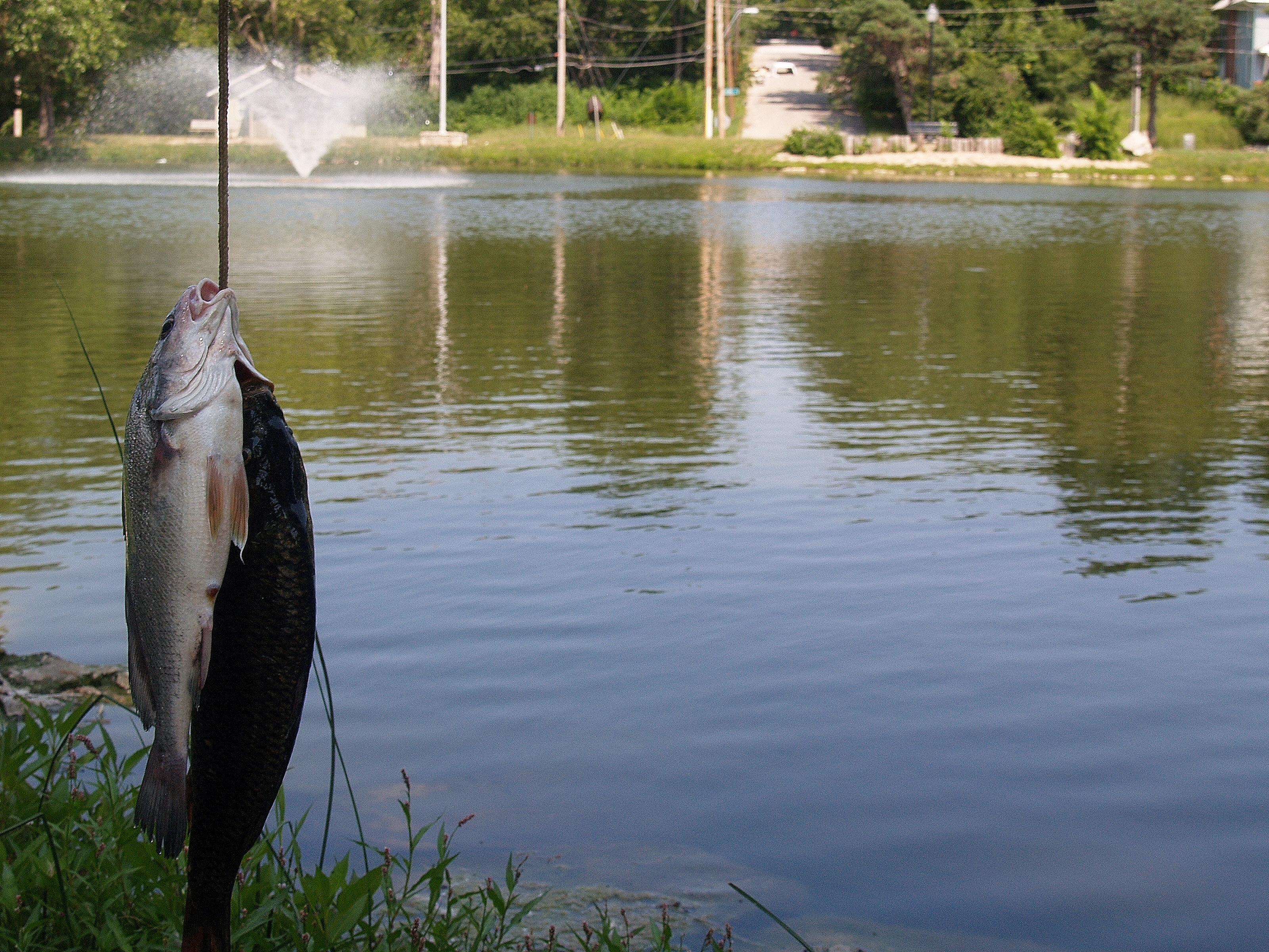 10 urban fishing spots in the kansas city area kcur