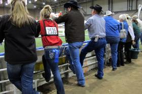 Attendees of the American Royal Livestock watch as Hereford heifers parade in front of judges.
