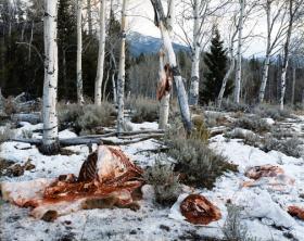 Quartered Rocky Mountain Elk, Milky Creek, White Cloud Mountains, Idaho, 2004; chromogenic print, 72 x 96 inches.