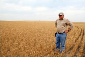 Kansas wheat farmer John Thaemert surveys his parched crop in this file photo from 2006.