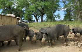 The cost of land has kept Teague stalled in starting her pig farm.