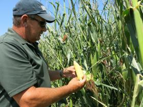 Rod Weimer, farm manager for Fagerburg Produce, checks on some of the farm's corn, which is watered by a sophisticated drip irrigation system.