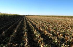 After the drought crippled corn yields in 2012, farmers across the Midwest are harvesting what could be the largest crop ever in 2013.