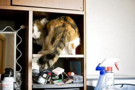 Cats and other pets often behave in ways that mystify their owners.