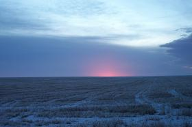 A dusting of snow covers a winter wheat crop.