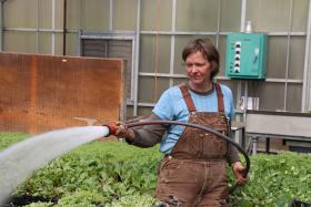 "Alicia Ellingsworth, manager of the Cultivate Kansas City Gibbs Road Farm in Kansas City, Kan., watered some head lettuce Tuesday. One vision for a ""healthy campus"" near downtown KCK would be for it to have a greenhouse like the one at the farm."