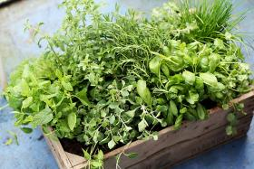 We're talking herbs and spices on Friday's Up to Date.