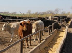 Low doses of antibiotics are often delivered to livestock in their feed.