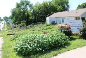 Ivanhoe's Dina Newman says more than 5,000 pounds of pesticide-free produce has been harvested from this garden during the past three years.