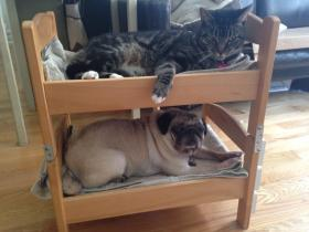 This bunk bed made out of IKEA doll beds is just one potential DIY project that can be made out of IKEA products.