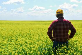A new study shows that agricultural workers have unusually high suicide rates compared to other workers.