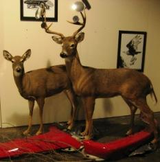 Two taxidermied deer in artist Davin Watne's studio at Review Studios.