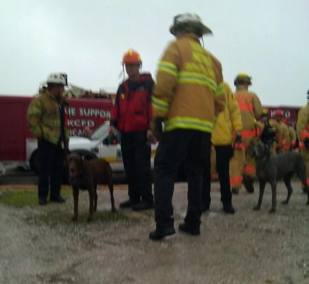 MOSAR (Missouri Search and Rescue K-9) assists in Joplin, Mo.