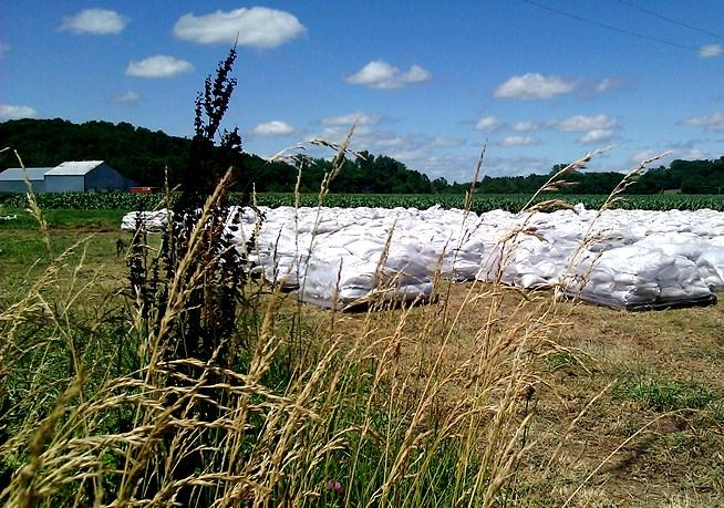 Beverly, MO.   field  where  some of  50 thousand  sandbags  are stockpiled.  They will line  tops of levees on the Missouri River  just   east of Leavenworth. ( Click to  enlarge)