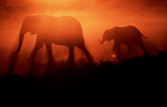 Elephant mother and calf at sunset